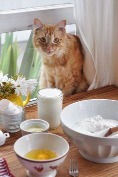 Grandma's Kitty - https://uk.pinterest.com/lpasch/grandmas-house/