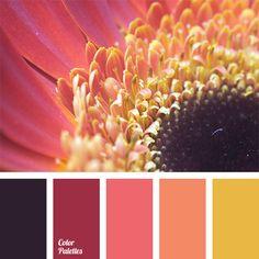 Orange Color Palettes   Page 14 of 31   Color Palette Ideas