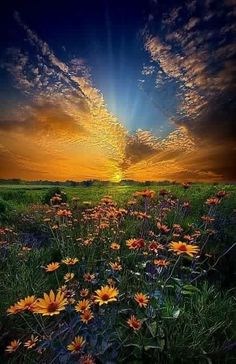 """Fantastic landscape photograph of a field of daisies at sunrise in Wisconsin, entitled """"Daisy Dream"""" by Phil Koch on Captured with a Canon EOS Focal Length Shutter Speed Aperture ISO/Film flowers Beautiful Sunset, Beautiful World, Beautiful Places, Beautiful Flowers, Beautiful Beautiful, All Nature, Amazing Nature, Nature Tree, Landscape Photography"""