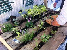Que vous ayez la main verte ou non, vous pouvez facilement créer un mur végétalisé, que vous exposerez sur votre terrasse, votre balcon ou encore dans votre jardin....