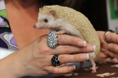 12 Things Humans Can Learn From Hedgehogs