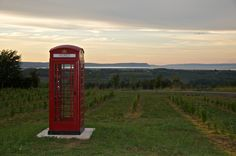 Luckett Vineyard near Wolfville, Nova Scotia.  Sample the wines and be sure to let family and friends in Canada know when you call long distance anywhere in Canada for free from this phone booth in the vineyard!