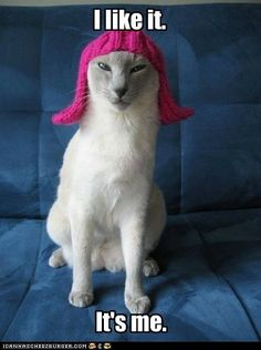 it's a CAT. in a KNITTED WIG. it has EVERYTHING.