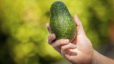 Durch leichtes Drücken erkennen Sie, ob eine Avocado reif ist (Quelle: Thinkstock by Getty-Images)