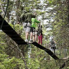 Walk in the Treetops whitefish Mtn Resort