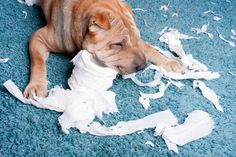 Why do dogs eat their poop? (And how to stop it.)