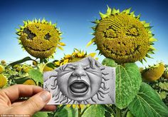 A different perspective: As these sunflowers smile, the one in the middle screams in this picture originally taken in Spain - Artist, Ben Heine
