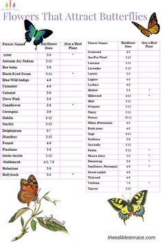 What Kind of Flowers Do Butterflies Like? Butterfly Garden - Garden Care, Garden Design and Gardening Supplies