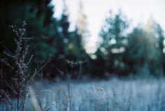 by Liis Klammer, via Flickr