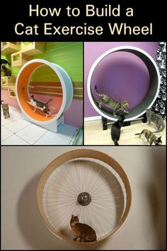 This DIY cat exercise wheel is a perfect gift for your pet!- This DIY cat exercise wheel is a perfect gift for your pet! This D… This DIY cat exercise wheel is a perfect gift for your pet! This DIY cat exercise wheel is a perfect gift for your pet! Diy Jouet Pour Chat, Cat Exercise Wheel, Diy Cat Tree, Cat Trees, Cat Playground, Cat Enclosure, Cat Room, Pet Furniture, Furniture Online