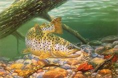 art Brown trout