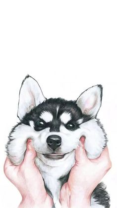 Lovely Siberian Husky hard Case Cover For iPhone 6 Samsung Huawei Sony LG. For iPhone 7 For Samsung Galaxy 2017 For Huawei Lite For Huawei Honor Pro. For iPhone 8 For Samsung Galaxy Plus 2018 For Huawei For Huawei Honor Tier Wallpaper, Tumblr Wallpaper, Animal Wallpaper, Screen Wallpaper, Wallpaper Backgrounds, Seagrass Wallpaper, Dog Wallpaper Iphone, Puppies Wallpaper, Paintable Wallpaper