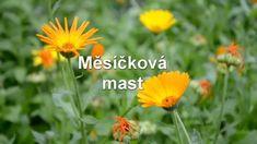 Měsíčková mast je vhodná na nejrůznější kožní problémy (např. jizvy, oděrky, spáleniny, drobné rány...)🏵️ Tip: pro tužší konzistenci masti lze ještě přidat včelí vosk. #mesickovamast #mesicek #měsíček #mesiceklekarsky #měsíčeklékařský #měsíčkovámast #mesickovakosmetika #mesickovapece #bylinnamast #mast #masticka #bylinnemasti #bylinky21 #mastzmesicku #domacimast #domacimasti #domacimasticka #vyrobamasti #domacivyroba #domacikosmetika #prirodnimast #prirodnipeceoplet #kozniproblemy #koznipotize Plants, Plant, Planets