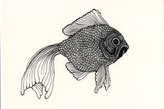 goldfish illustration - Google Search