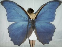Projector shoot, butterfly model