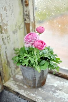 flowers on the window sill Fresh Flowers, Pink Flowers, Beautiful Flowers, Pink Roses, Potted Flowers, Ikebana, Window Sill, Rain Window, Plantation