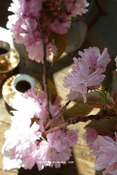 Blog campagne chic - les floraisons de printemps 2016