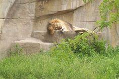 Brookfield Zoo - Brookfield, IL