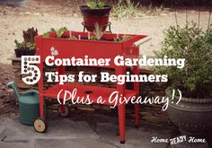 "Container Gardening is a great option for those of us who don't have an ""ideal"" garden plot. Here are 5 tips to help you get started and be successful."