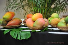 Beautiful Mangos    This photo taken by our Immediate Past President Susan Lerner represents just a few of the amazing Mangos that we can grow.To grow your own tree go to pbrarefruitcouncil.org for RFC fruit tree sale information or to contact one of our members who sells them here in West Palm Beach, Florida Tree Sale, Mango Tree, Mango Recipes, Edible Plants, Growing Tree, West Palm Beach, Grow Your Own, Fruit Trees, Fruits And Veggies