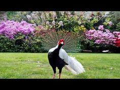 PAUL MAURIAT - EL BIMBO ( HD ) - YouTube
