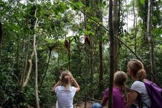Bukit Lawang - geuser national park - great jungle trekking experience with Edie and his friends in Sumatra, Indonesia.