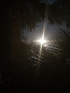 Moonlight shining through the trees along my driveway. #moon #moonlight #outeast #igersFla #ilovejax #jaxskies #igersjax #ig_jax #ig_florida #floridaskies #duval #explorejax #discoverjax #904skyporn #skyporn #dtjax #instagram_florida #jackiebrownsbc #headoutoftheclouds #flalandscape #jaxpics #clouds #cloudporn #sun #sunlight #sungazer #iphone5Sphotos #sunrise #browninkus #skinnyfiber #skinnybodycare #daybreak #morninginjax @browninkus Jackie Nelson Brown