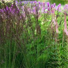 molinia - Hledat Googlem Colourful Garden, Plants, Color, Colour, Plant, Planets, Colors