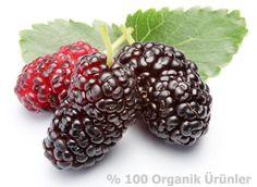 %100 Doğal Organik Köy Ürünleri