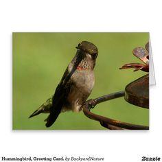 Hummingbird, Greeting Card. Greeting Card