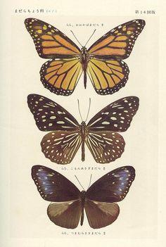 papillon 14 by pilllpat (agence eureka), via Flickr