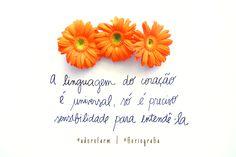 Floriografia: Gérbera @adorofarm