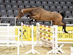 www.sporthorses-online.com 2011 Hanoverian Jumper mare for sale