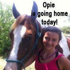 Reunited and it feels so good! Opie the stolen horse was returned after 10 abusive years