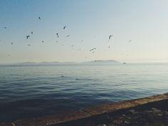 fenerbahçe, istanbul. #sea #islands #birds #sky #beautiful #istanbul #turkey #vscocam #vsco
