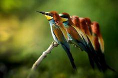 13.mar.2017 - O concurso de fotografia Sony World Photography Awards anunciou os candidatos ao prêmio de melhor foto em diversas categorias. O brasileiro Marcio Cabral é um dos escolhidos na categoria Vida Selvagem. Veja a seguir outras fotos selecionadas nas diferentes categorias