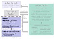 The Association of Chartered Certified Accountants stimuleert waardering van natural capital bij investerinsgsbeslissingen.