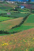 En el altiplano de Túquerres, las zonas suavemente onduladas son aprovechadas en la producción agrícola.