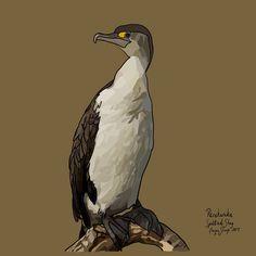 Pārekareka (Spotted Shag) on Photo Block Photo Blocks, Photo Reference, Birds, Website, Digital, Prints, Painting, Animals, Animales