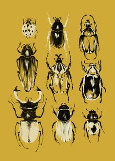 Gold Beetle Collection Art Print - Teagan White