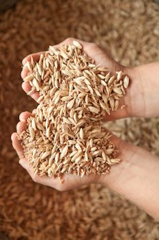 Bluebird Grain Farms | Farm Fork Life, by Julie Brothers and Lee Glenn Recipes using Emmer or Farro grain.