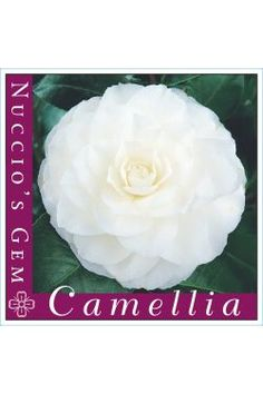 Camellia Nuccio's Gem Camellia, Gems, Garden, Garten, Rhinestones, Lawn And Garden, Jewels, Gardens, Gemstones