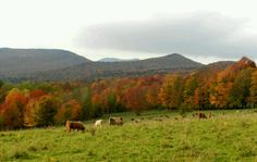 Trapp Family Lodge in Stowe, VT 10/11/12