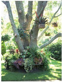 Клумба под деревом из садовых и комнатных растений.