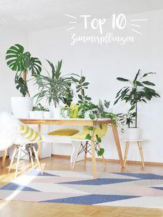 zimmerpflanzen die 10 besten gr nen luftfilter gut zu wissen pinterest pflanzen. Black Bedroom Furniture Sets. Home Design Ideas