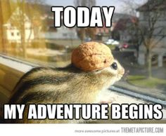Adventure Chipmunk....laughed a bit too heartily. I may be Adventure Chipmunk for Halloween.
