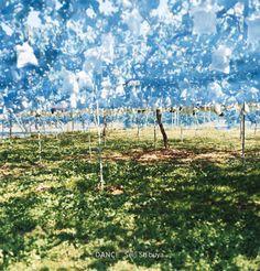 "From the photobook ""Dance"" by Seiji Shibuya, via www.lensculture.com"