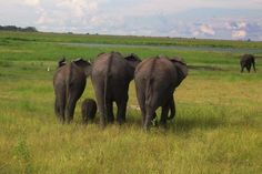 Chobe National Park, Botswana Photo by AnitaJRT The Ultimate Travel Photo Wall - TripAdvisor