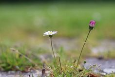#naturephotography #natuurfoto #onkruid #scherptediepte #canonbelgium #50mm #driefonteinen #vilvoorde Instagram, Plants, Plant, Planets