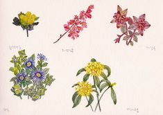 FLOWER FLOWER: 야생화 그려보기(Plactice  watercolor with wild flowers/La...
